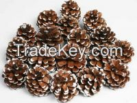 Pine cones for Christmas WHATSAPP +84947 900 124