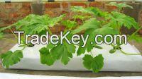Coir Grow Bags-COCONUT SHELL FOR PLANTING- WHATSAPP +84947 900 124