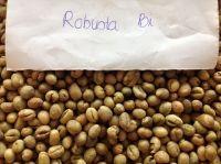 Vietnam arabica green coffee bean/Ms.Hanna