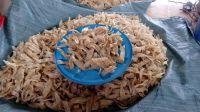 Dried fish bladder/High quality fish maw/Ms.Hanna