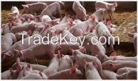 feed grade bile acid premix