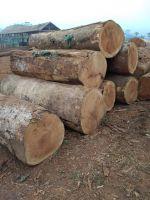 African Wood Species