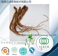 High Quality Natural American Ginseng Extract