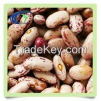 kindney beans