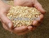wheat barley (animal feed)