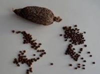 Kola nut, Bitter kola, Alligator pepper and black pepper