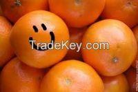 Egyptian Orange