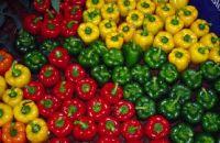 Color Fresh Capsicum