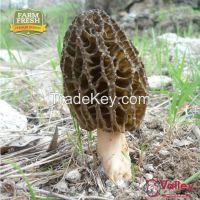 Dried Morel Mushroom Organic Kanguch Permium Grade