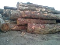 Tali wood logs