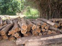 Doussie Wood Supplier