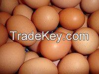 Farm Fresh Chicken Table eggs / Brown Shell chicken eggs / Fertilized Chicken eggs