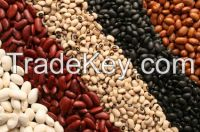 KIDNEY BEANS AND COFFEE BEANS