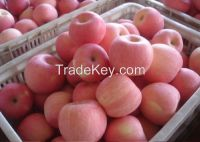 Fresh Gala Apples on hot sale.