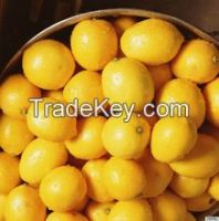 Fresh Eureka Lemon, Limes, Lemon, Avocado and Apples on hot sales