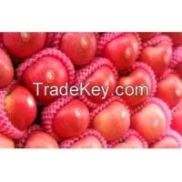 High quality Red Fuji , Red and Fresh apples on sales