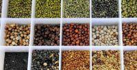 Organic Sunflower/Pumkin Kernels,Pistachio Nuts ,Pinenuts,Peacan,Melon Peanuts,Hazelnuts,Chestnuts,Cashew Nuts,Betel Nuts And ALMONDS Suppliers