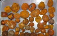 Best Quality Dried Natural Ox/Cow Gallstone
