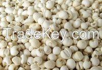Fritillariae Cirrhosae Bulbus/Chuan Bei Mu/First Grade/Moisten Lung/Reduce Phlegm