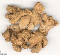Atractylodes/Bai  Zhu/Bighead atractylodes rhizome/Chinese Herbs�whole/cut/powder