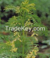 Astragalus/Huang Qi /Genuine Medicinal Materials/Chinese Tonic Herb