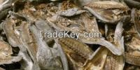 indian Mackerel,King fish, Queen Fish, Cat Fish, Skip Jack Tuna, Sail Fish, Yellow Fin Tuna