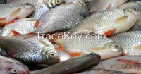 Cuttlefish, Lobster, pangasius fish, Silver Pomfret