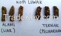 Luwak Coffee / Arabica Civets handpick Super Premium Coffee Beans from Indonesia