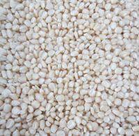 Non Gmo White maize