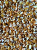 Brazilian Brown Eye Beans, Cowpeas, Popcorn, Non-Corn GMO and Yellow Millet