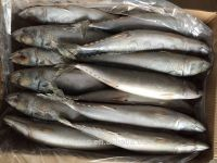 Frozen Pacific Saury Fish, Canned, Bait, Seafood