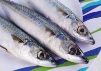 Frozen Atlantic Mackerel (Scomber Scombrus)