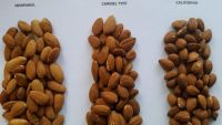 Roasted Almond nuts/Almond with shell